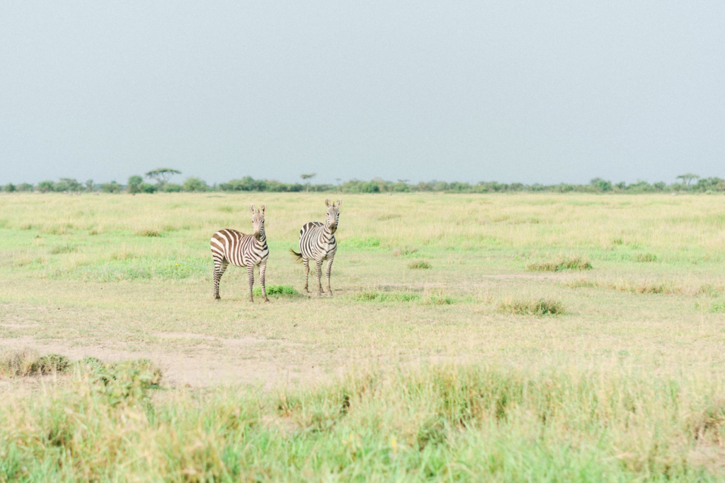 Serengeti Wildlife Tanzania Travel Photography