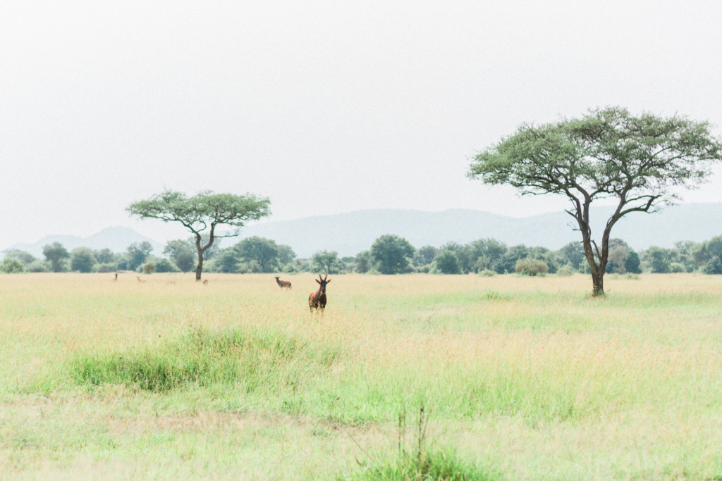 Serengeti Tanzania Travel Photography