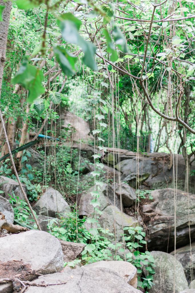 Nature Mwanza Tanzania